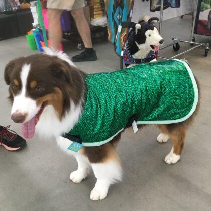 Dog Show Apparel